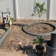 Tree Circle After
